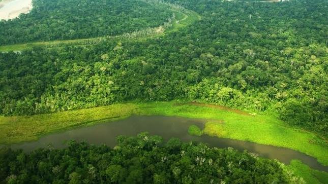 MINAM: Deforestación en Amazonía peruana se habría reducido en más de 28% durante aislamiento social obligatorio