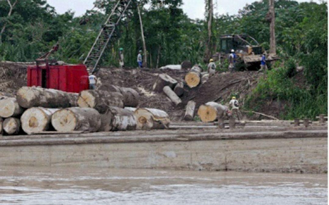Siete empresas de fachada vendían madera ilegal en Lima