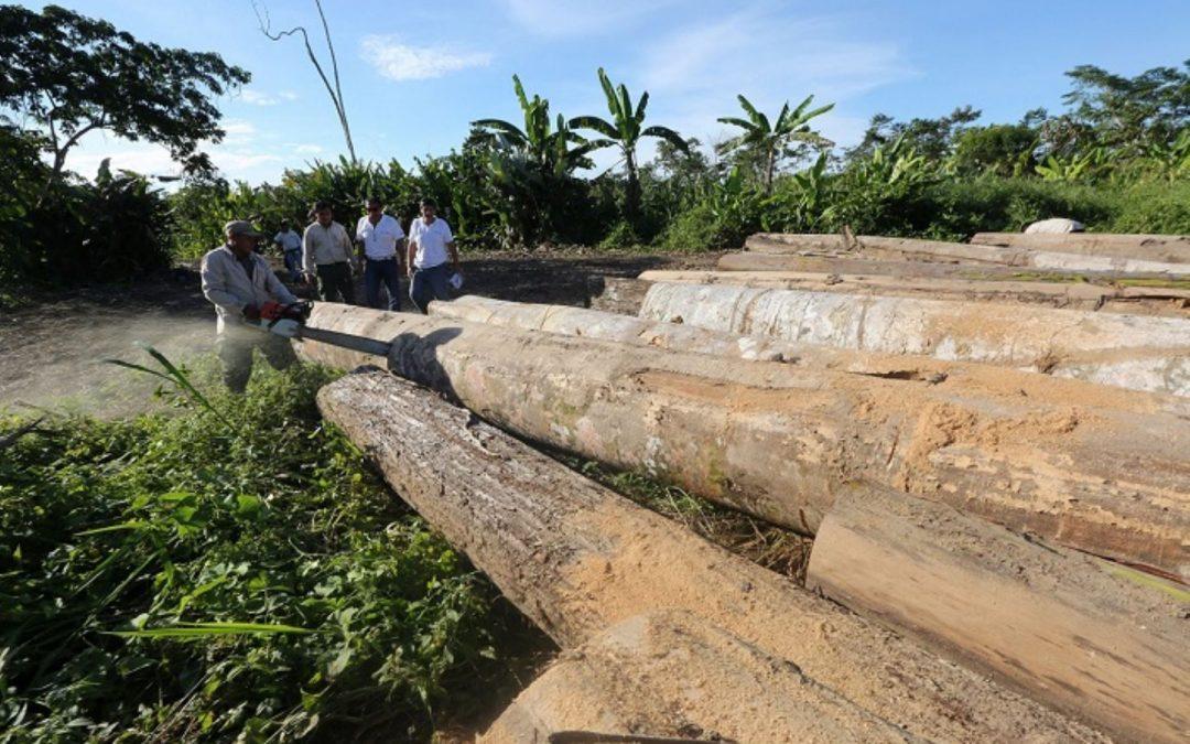 Golpe a mafia maderera evidencia compromiso del Gobierno contra tala ilegal