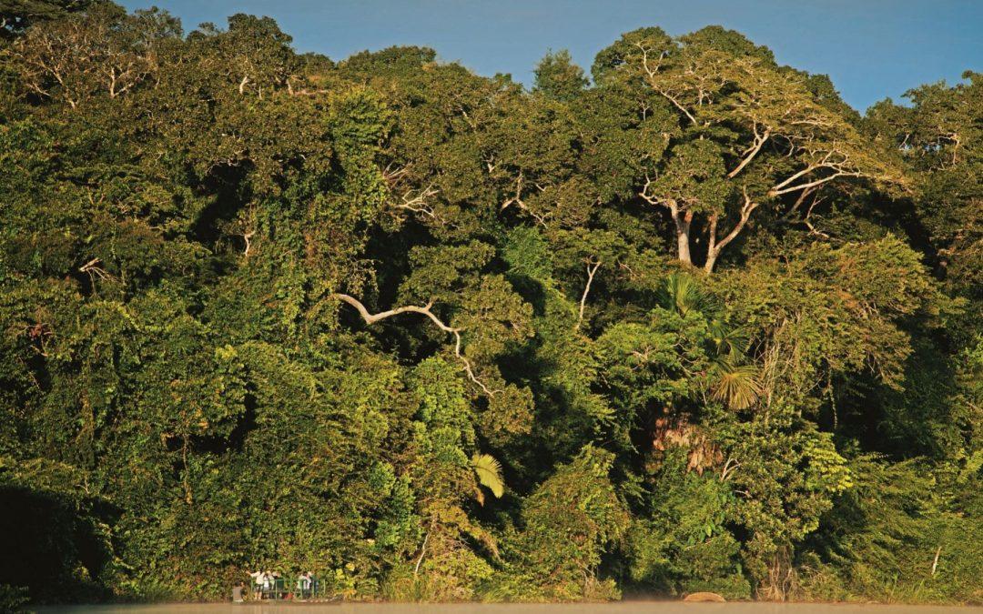 Distinguen al Perú por conservación en Bahuaja Sonene y Tambopata