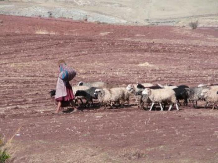 Bolivia: Titulación de la propiedad indígena no está condicionada al reconocimiento estatal de la «personalidad jurídica» de los pueblos indígenas