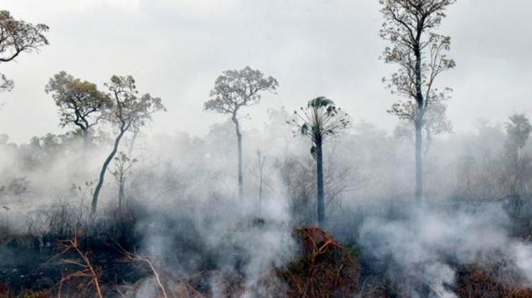 Brasil: Deforestación se incrementó en un 67% en la Amazonía
