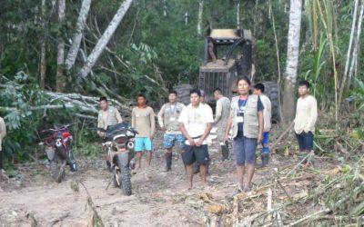 Frontera Perú – Brasil: Denuncian conflicto entre indígenas y empresas madereras por destrucción de bosques