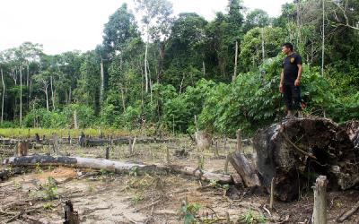 Ucayali: Denuncian brutal ataque e intento de asesinato contra indígena cacataibo